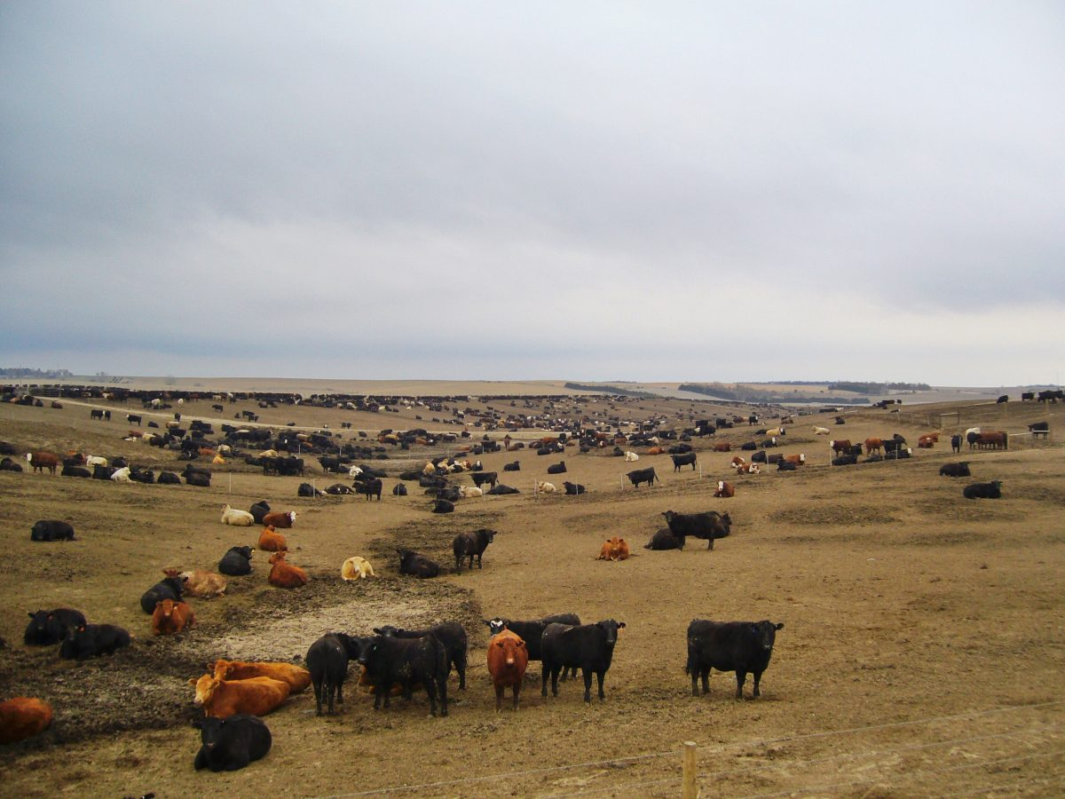 Feed Lot in Nebraska